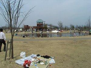 山形市西公園は春満開!