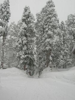 冬の出羽三山神社