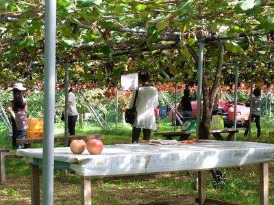 上山観光果樹園