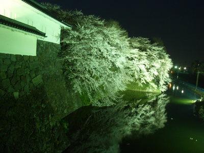 ♪速報♪山形の桜はほぼ満開だ