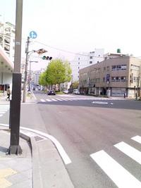 新緑@五橋通り