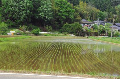 田植えは日本の心です③