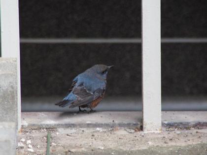 この鳥は〜何の鳥!?