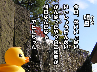 アヒルちゃんポストカード風2