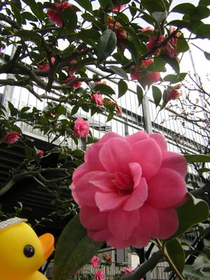 アヒルちゃんと花のある風景シリーズ③