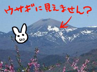 世界一大きなウサギ?