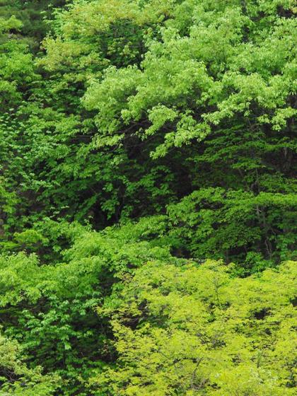 新緑の美しさ、無限大①