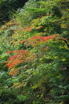 ほんのり秋の景色・・・(´∀`*)