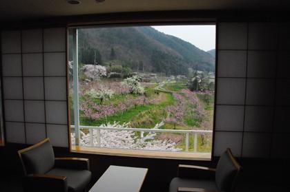 花見山・・・ではなくお部屋からの景色です。