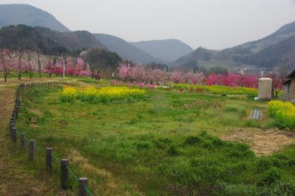 飯坂温泉の桃源郷~花ももの里~