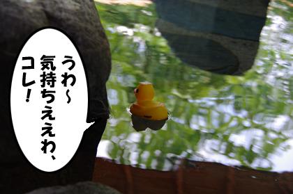 アヒルちゃん・イン・ザ・温泉♪その1