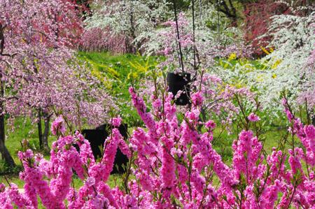 【2】これは綺麗!花ももの里でお花見会♪