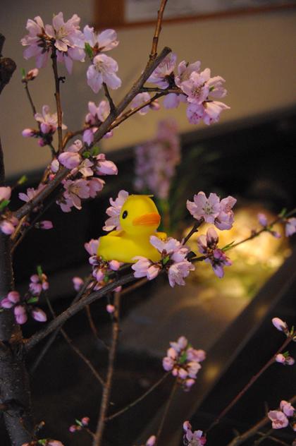 ちょっぴり早い春☆byアヒルちゃん
