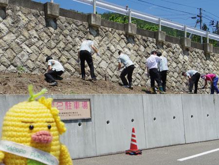 吉川屋のひまわり植え2013!!