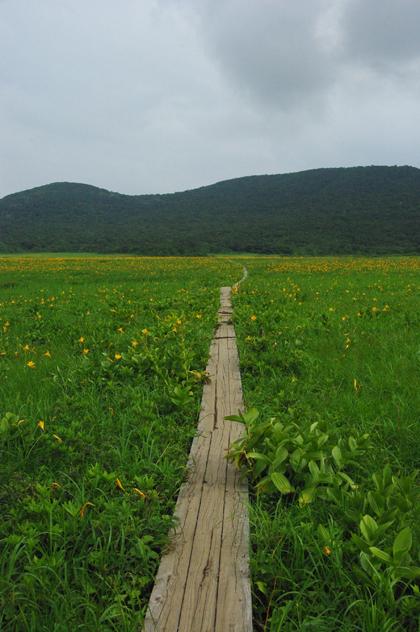 まるで極楽浄土!雄国沼のニッコウキスゲ。