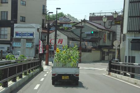 希望のひまわり大作戦in飯坂温泉!!