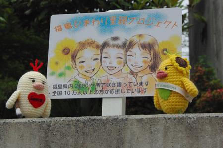 ひまわり観察日記☆2012年6月22日